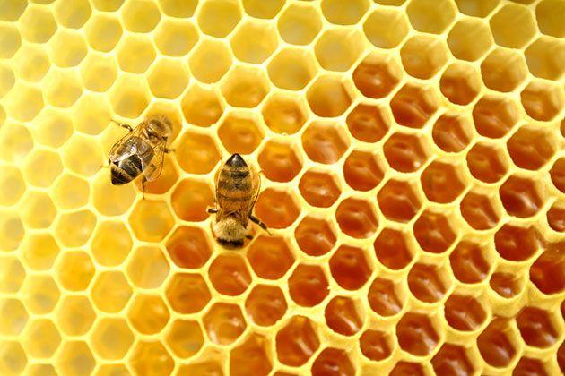 بعض من الفوائد التي يحتوي عليها العسل