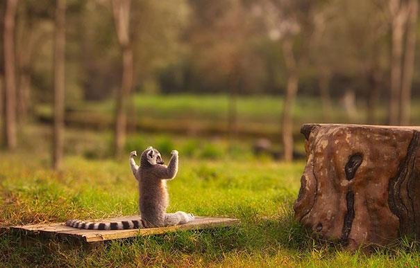 مجموعة مضحكة من الحيونات سوف يقومون بإعطاءك درس في اليوغا