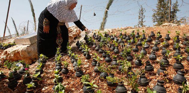 فلسطينية تزرع الورود في قنابل الغاز المسيلة للدموع