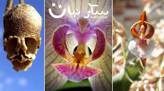 بالصور 16 نوع من الزهور تظهر باشكال اشياء اخرى