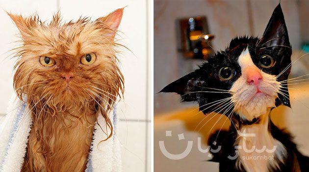 مجموعة مضحكة من 22 صوره لقطط مبللة